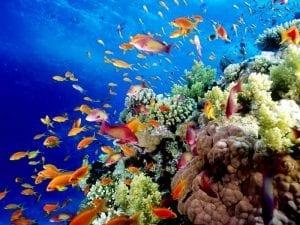 Austrailia Great Barriar Reef